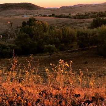 Afternoon light in the South Australian Flinders Ranges. Sunset over the hills.