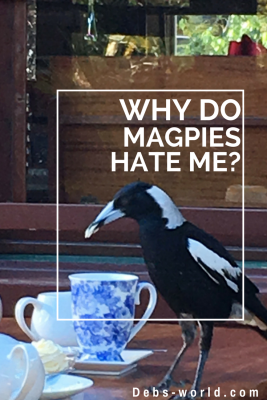 Magpie pin