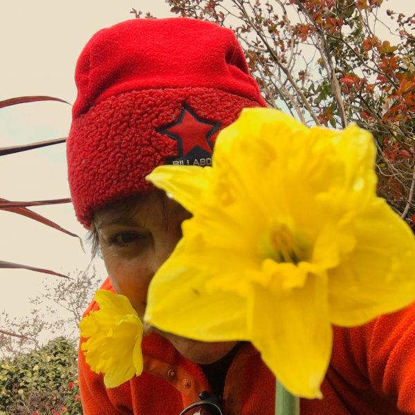 Debbie and the Daffodils
