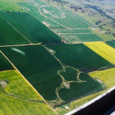 A different sort of green and gold flying over Wagga Wagga