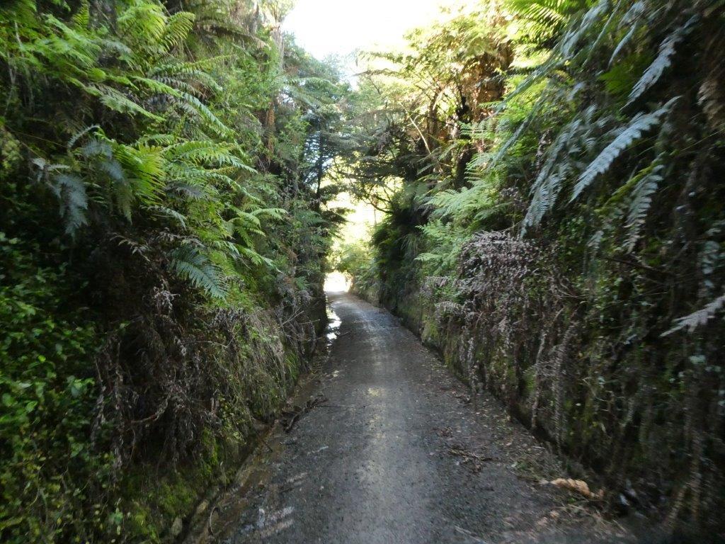 A cutting on Hauraki rail trail