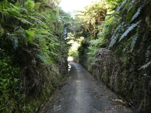 A cutting on Hauraki rail trail