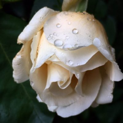 """""""Welcome home"""", says the rose"""