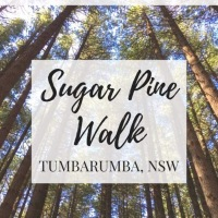 Worth a Word Wednesday: Why you must visit Sugar Pine Walk