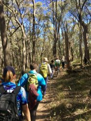 Tumbatrek through the bush in Tumbarumba