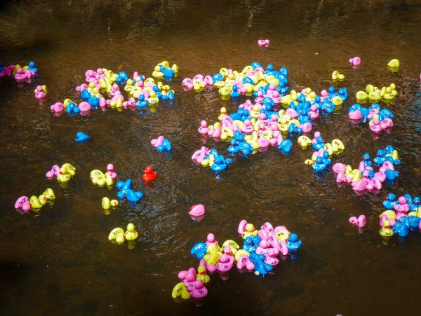 Tumbafest Duck Race at Tumbarumba