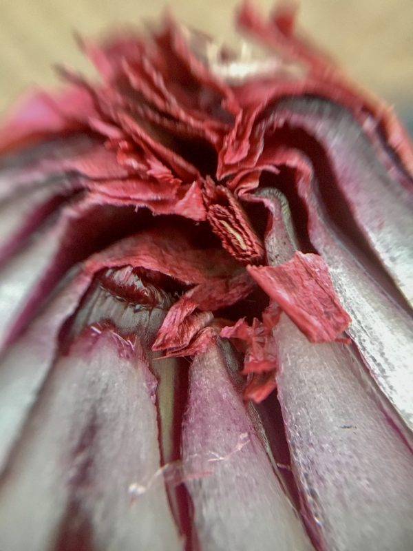 Red onion for 52 week photo project