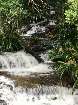 Tumbling water at Springbrook QLD