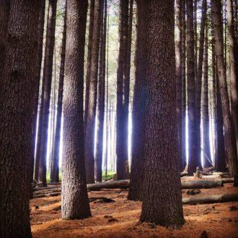 Magic happens in Sugar Pine walk