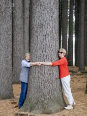 Treehuggers in Sugar Pine Walk near Tumbarumba