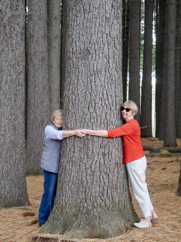 Treehuggers in Sugar Pine Walk near Tumbarumba
