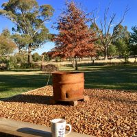 Wordless Wednesday: afternoon tea time