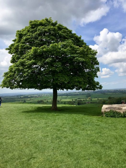 One Tree Hill at Dyrham park
