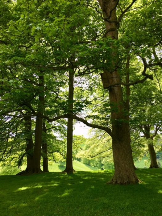 Shades of green at Dyrham Park