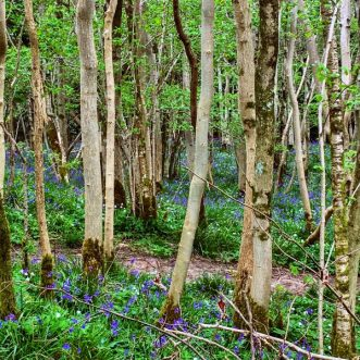 spring colour in the woods in Cheddar