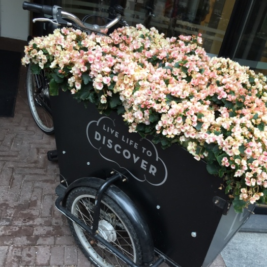 Delicate pinks in Amsterdam