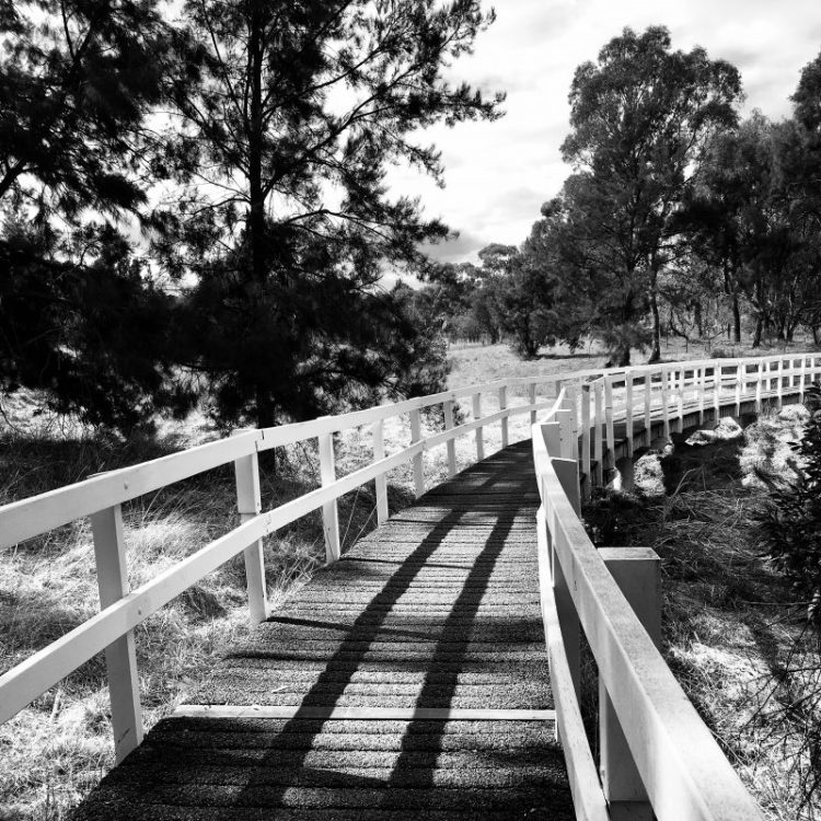 A walk in Umbagong District Park in Canberra