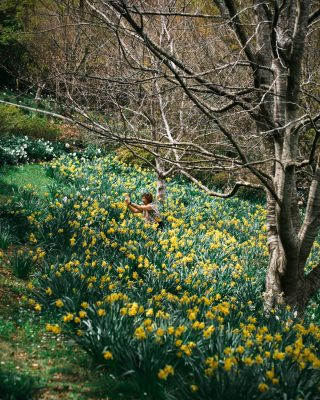 In the Daffodil Meadow at Forest Glade Gardens