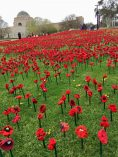 62000 poppies at Australian War Memorial Canberra