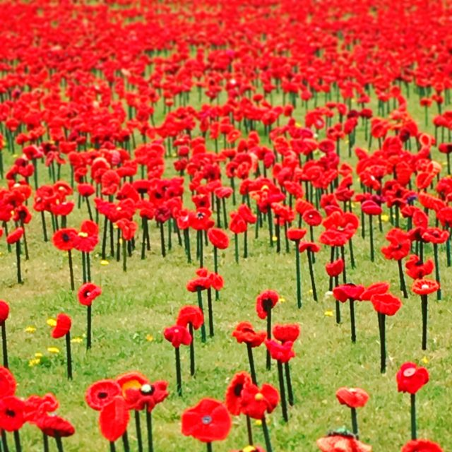 62000 Handcrafted Red Poppies