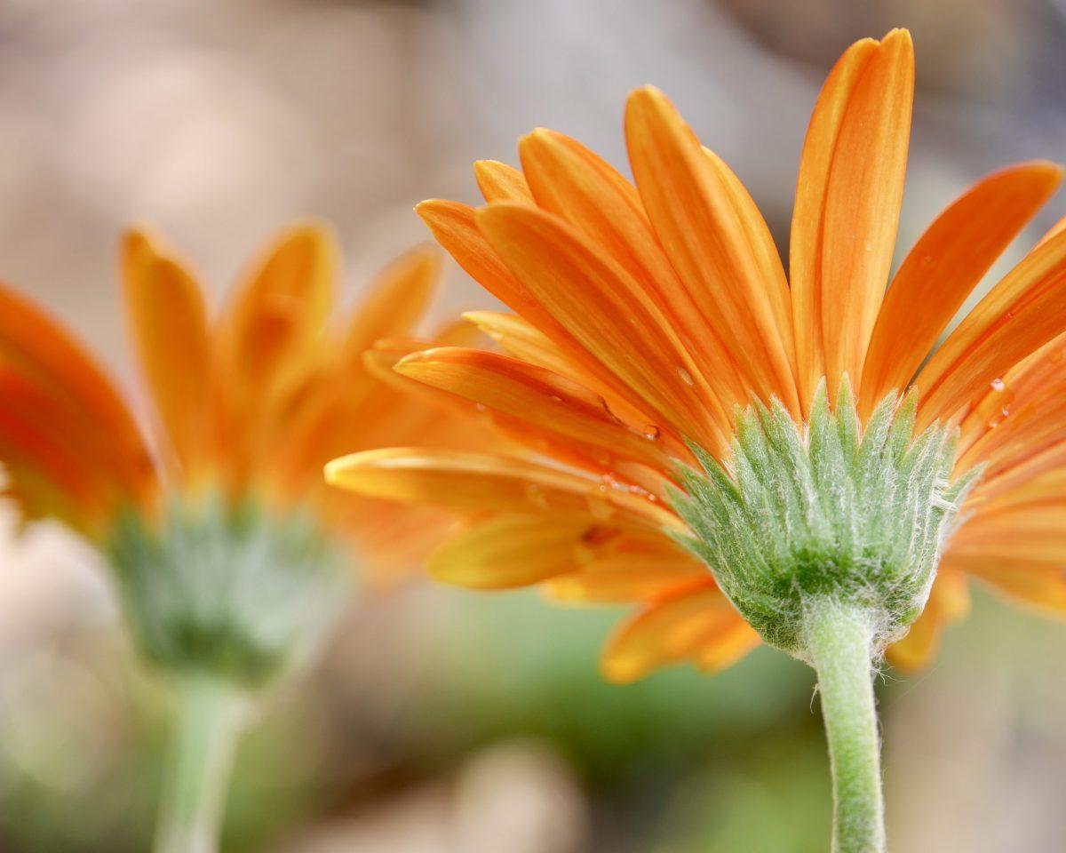 Saying hello with orange flowers!