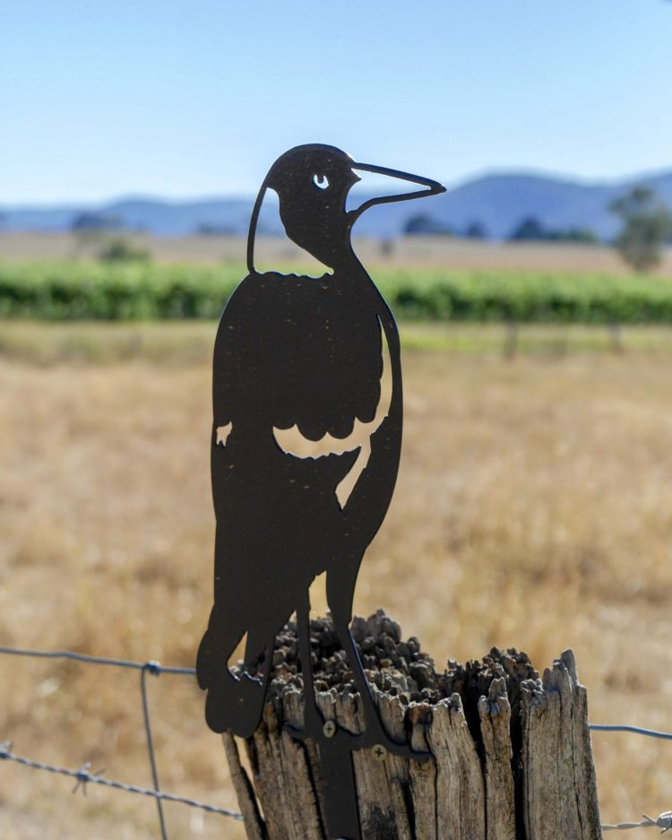 Magpie sitting on the fence