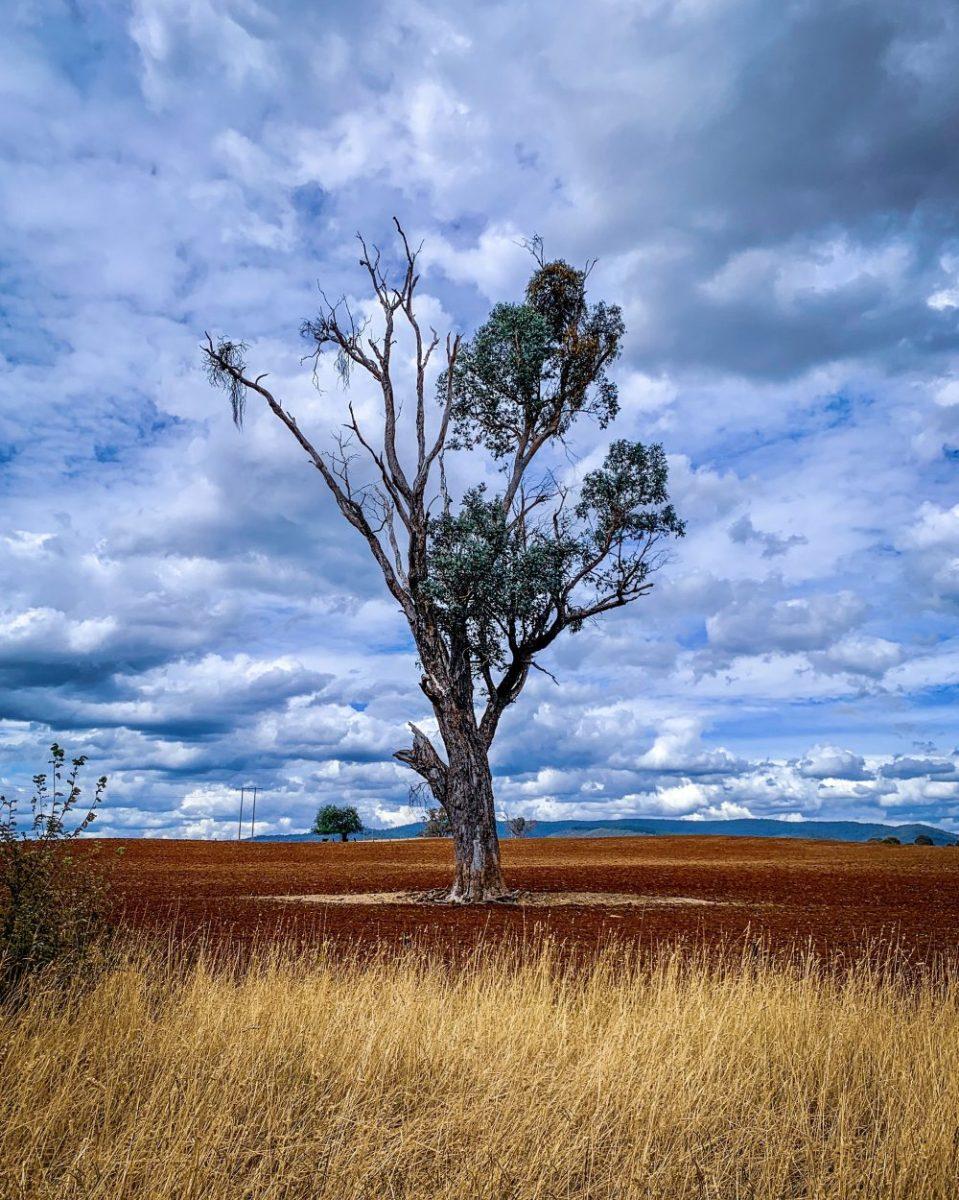 Wordless Wednesday: The language of trees
