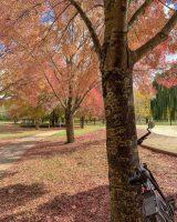 A touch of autumn in Tumbarumba