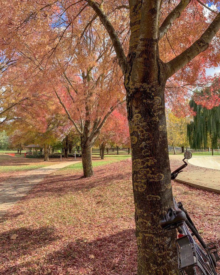 A touch of autumn in Tumbarumba