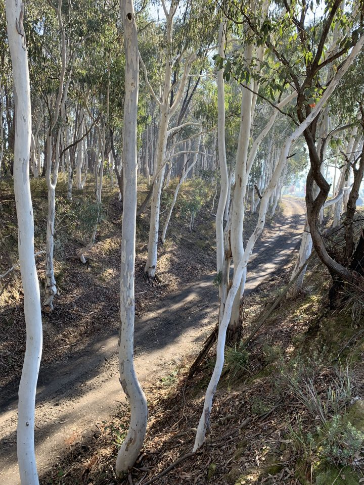 Tumbarumba Rail Trail