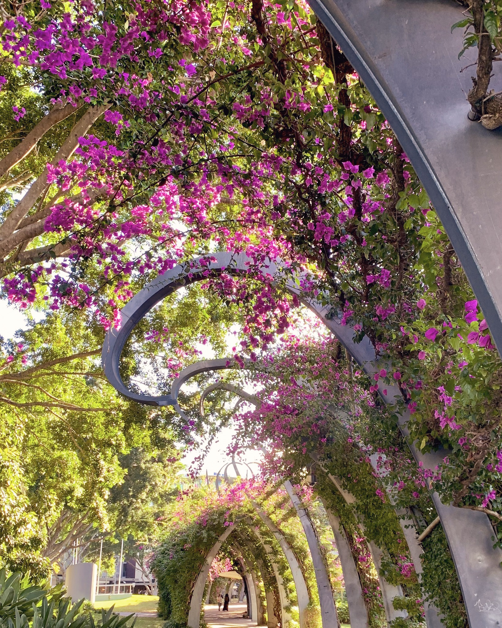 The bougainvillea arbour at South Bank Brisbane