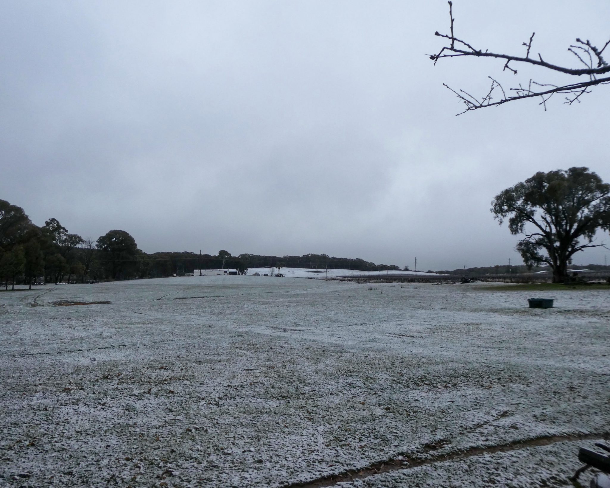 Snowy paddocks
