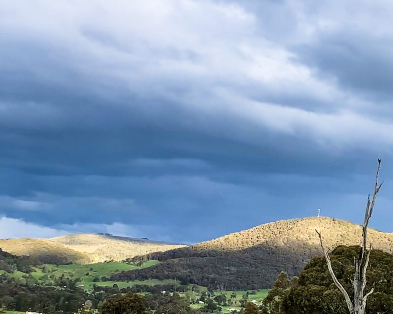 Tumbarumba hills are alive