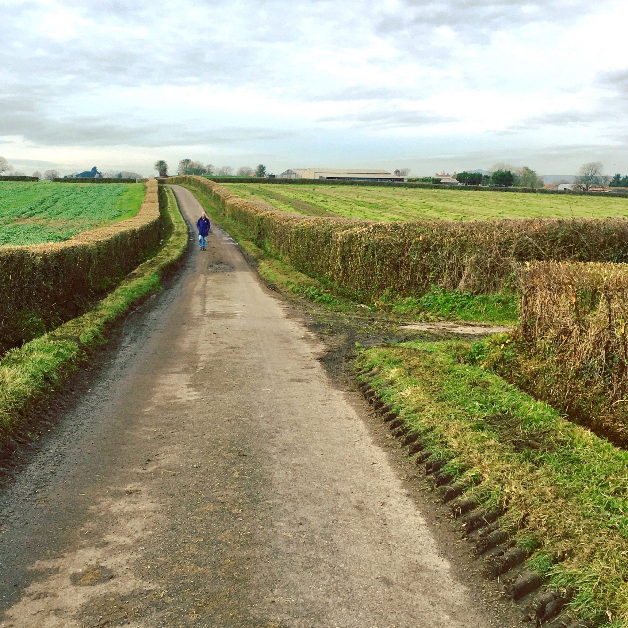 Rural Somerset