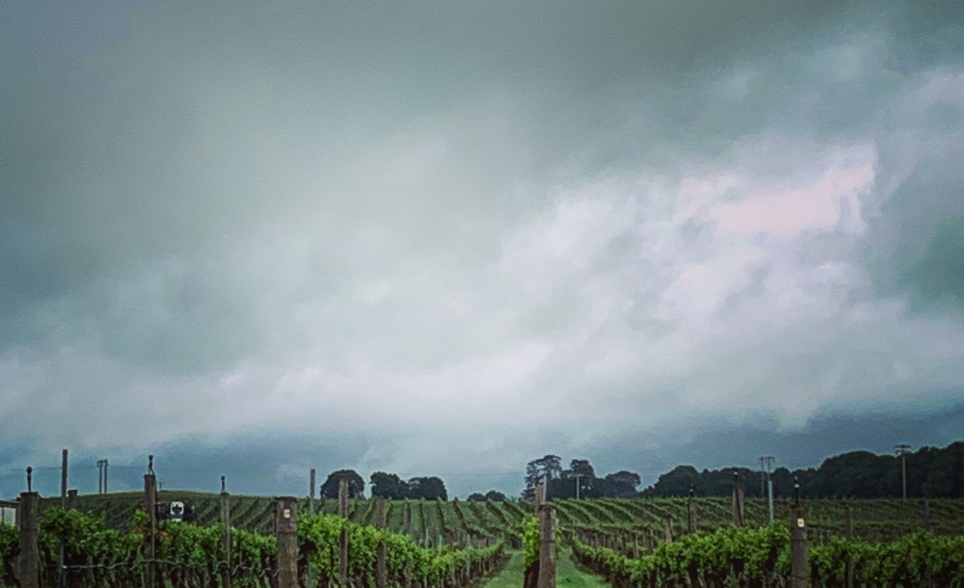 Storm over the vineyard