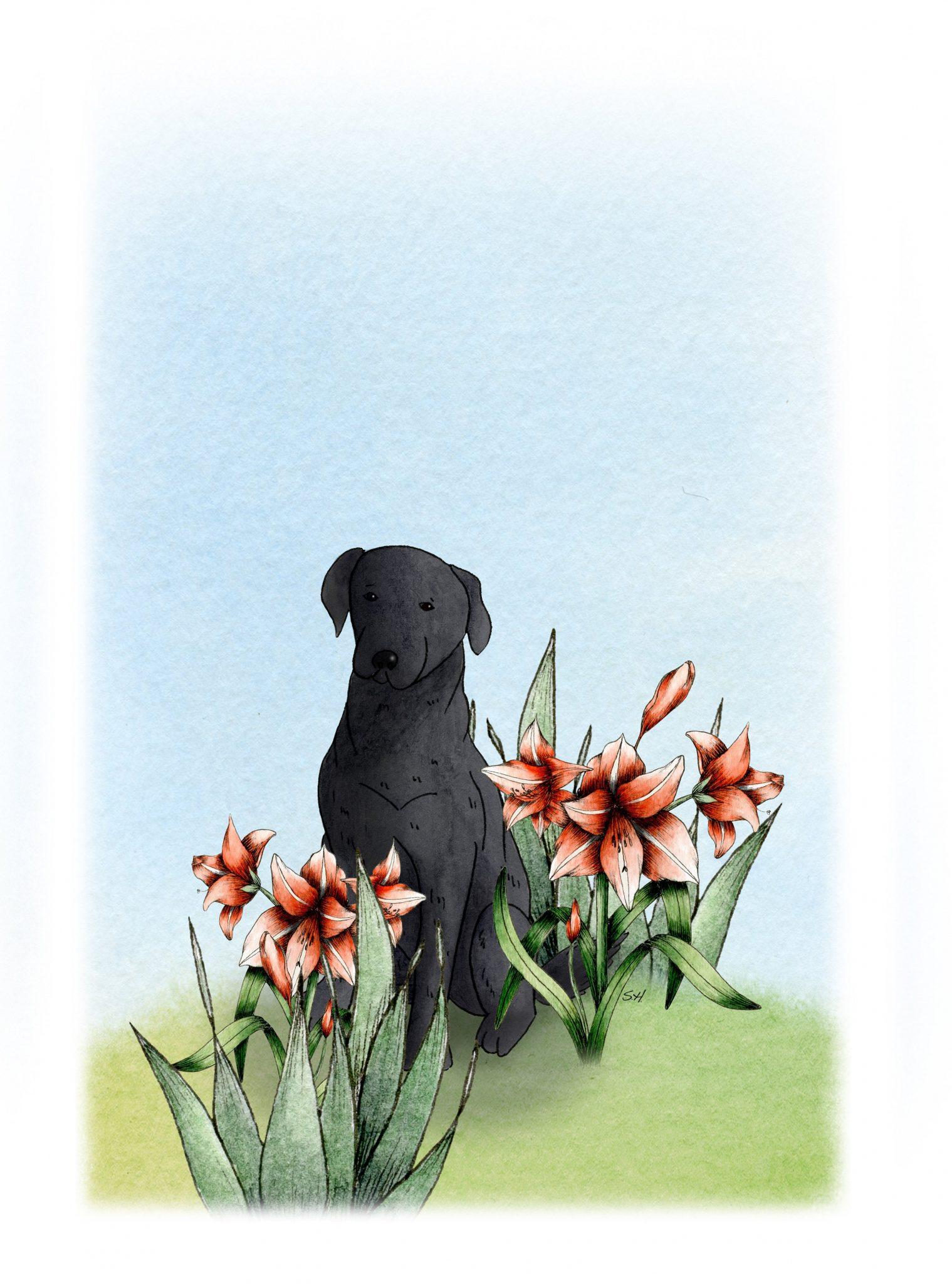 Ozzy dog
