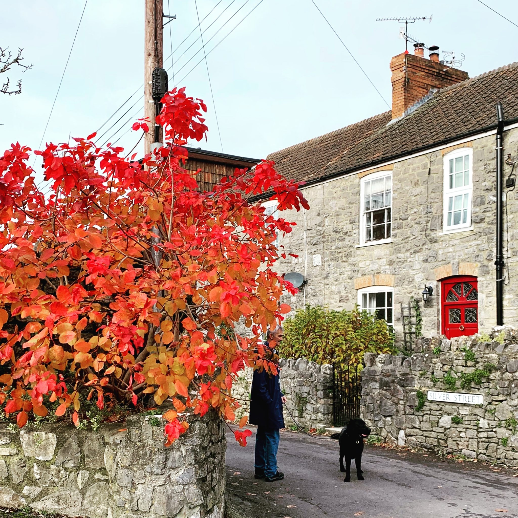 Autumn colour in November