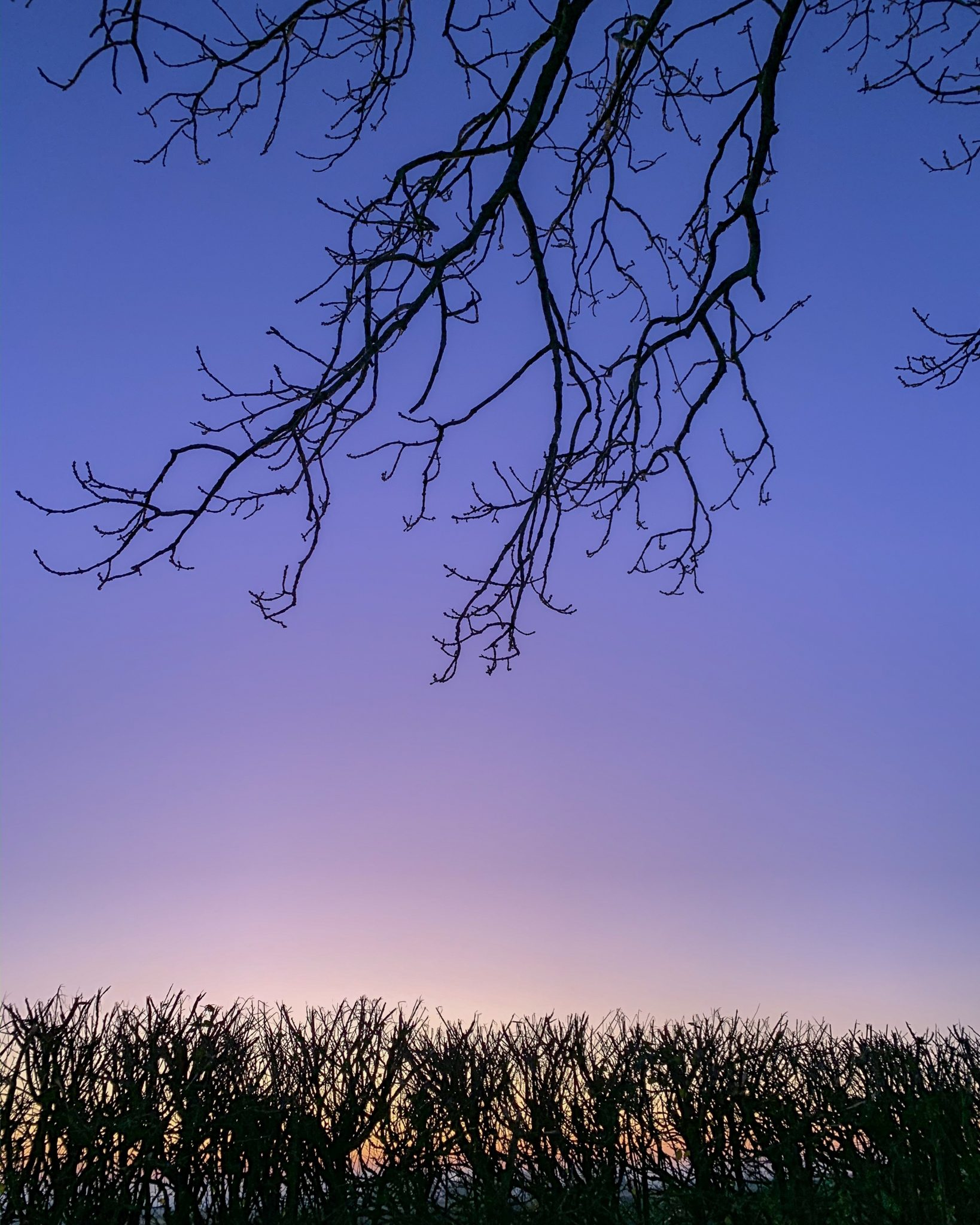 Sunset through the hedgerow