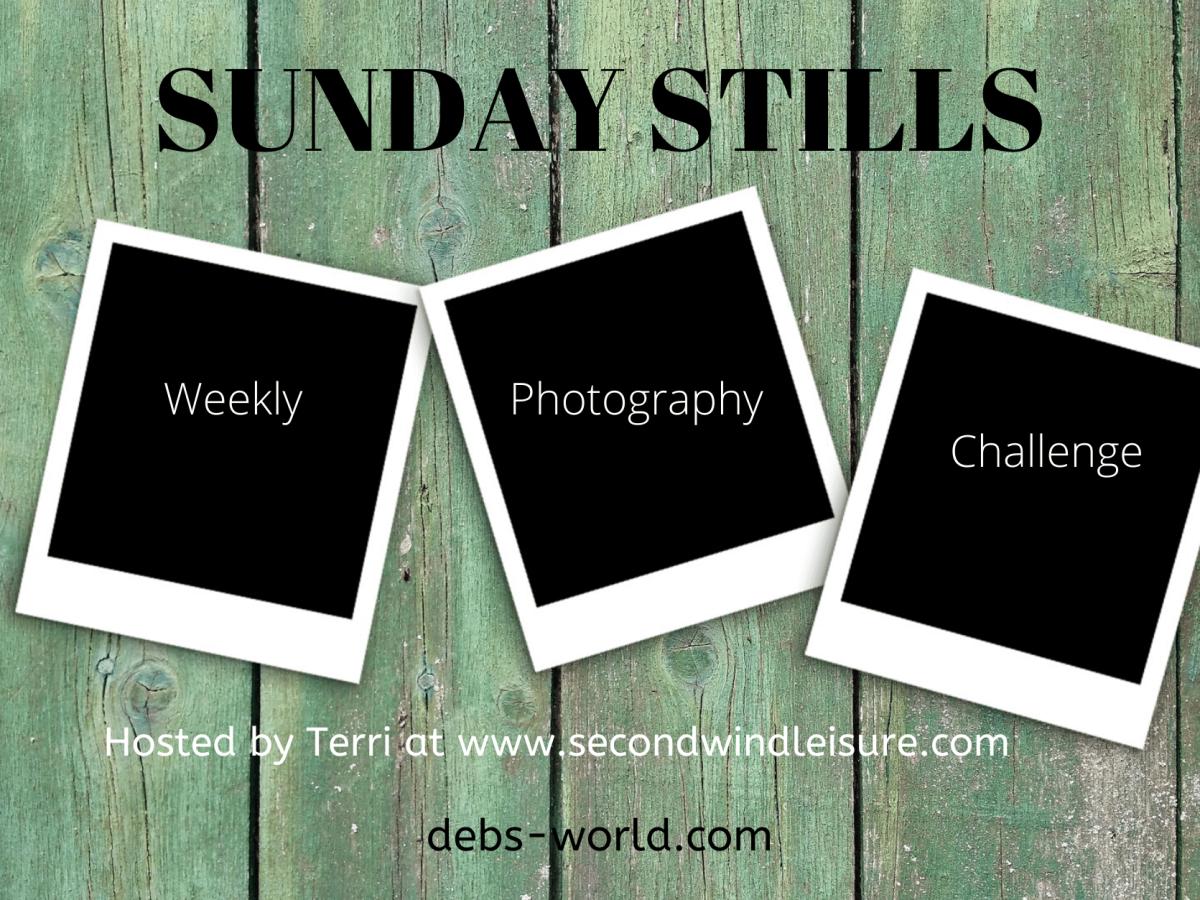 Sunday Stills Banner
