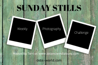 Sunday Stills Banner