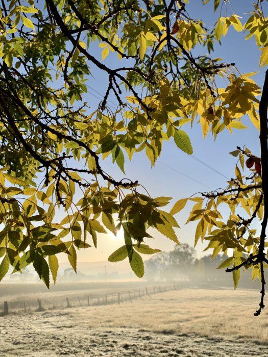 Autumn morning 2