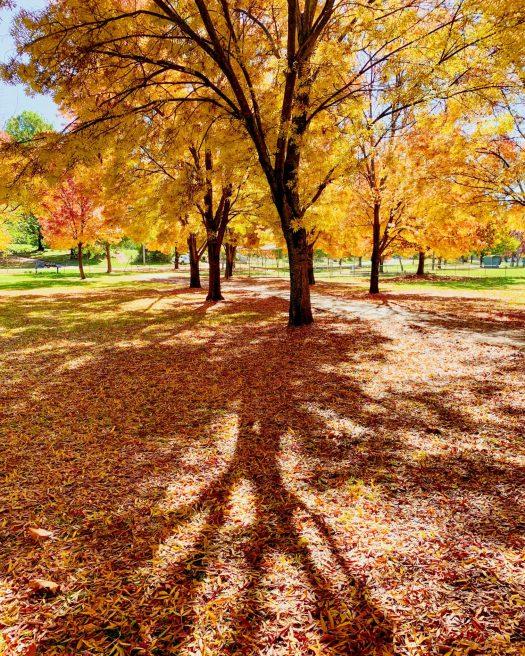 Autumn colour in Tumbarumba