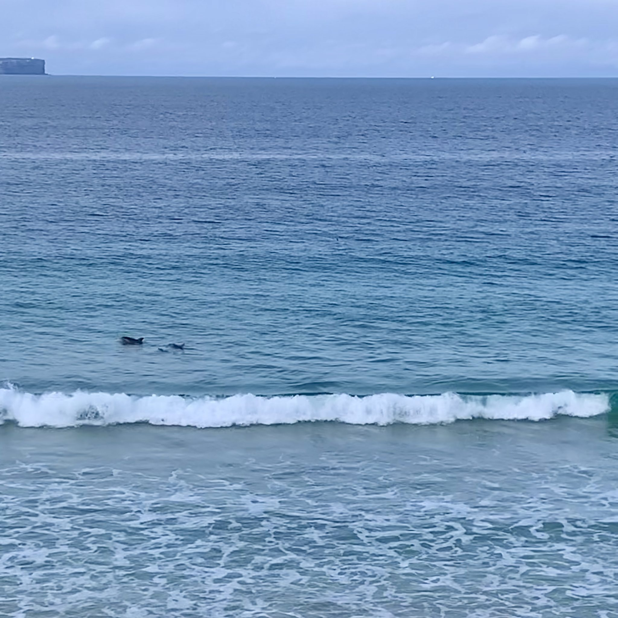 dolphins surfing at Vincentia