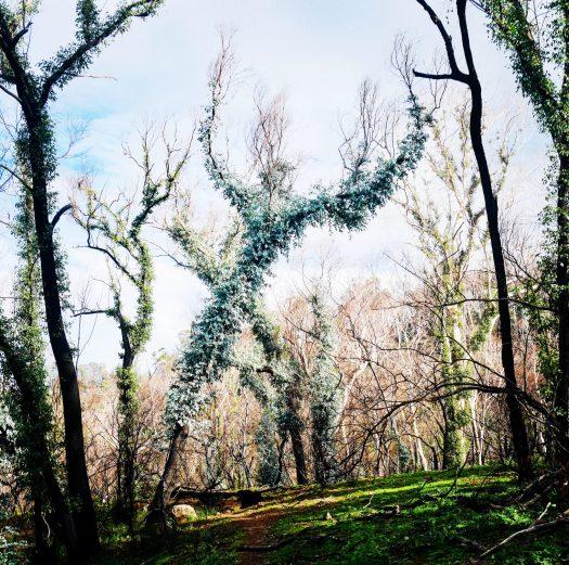 Monster tree man