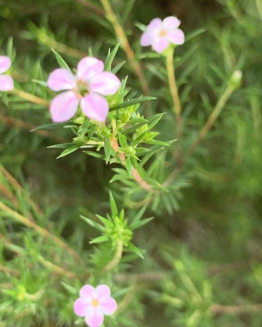 Pretty pink plants