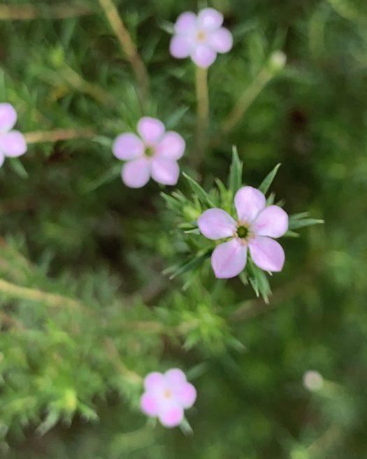 Pretty pink plants 2
