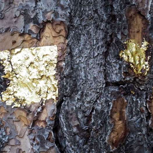 Gold on the trees