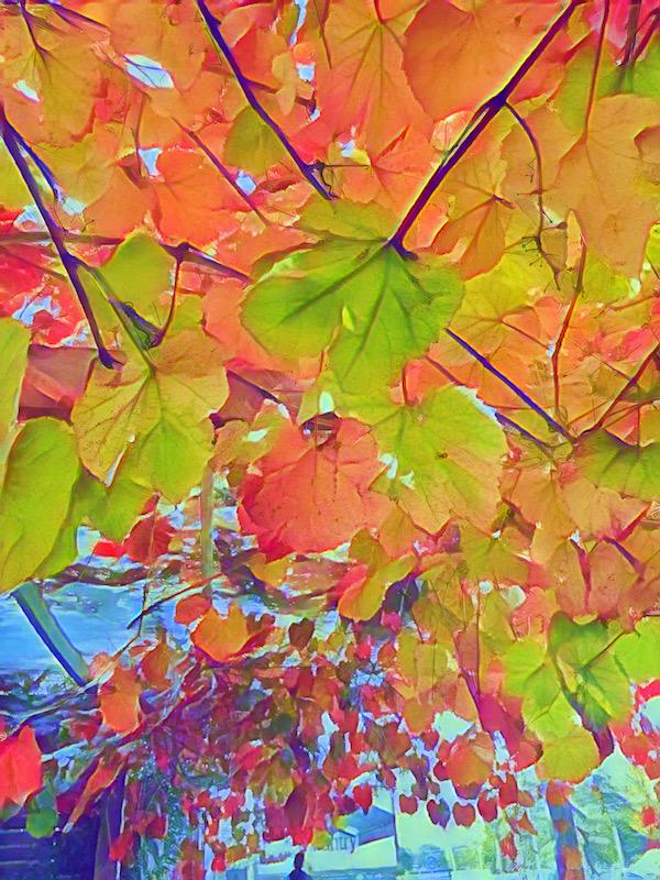 autumn colour as photo art