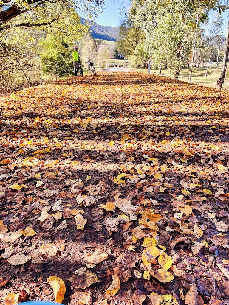 carpet of leaves