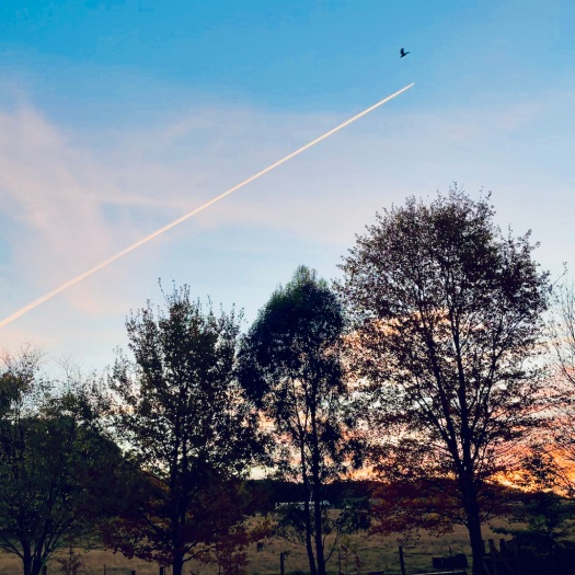plane trail and bird almost collide